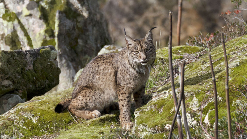 5 gatos geniales en la naturaleza