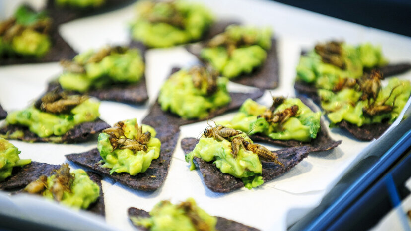 Guacamole with crickets is on the menu here, although some say they're best when served sautéed with butter, salt and onions. Peter Marovich/MCT via Getty Images