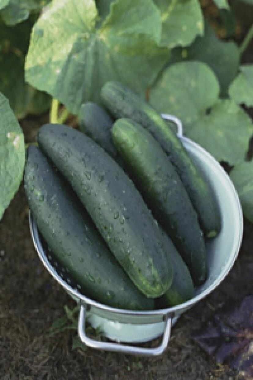 きゅうり:自然食品