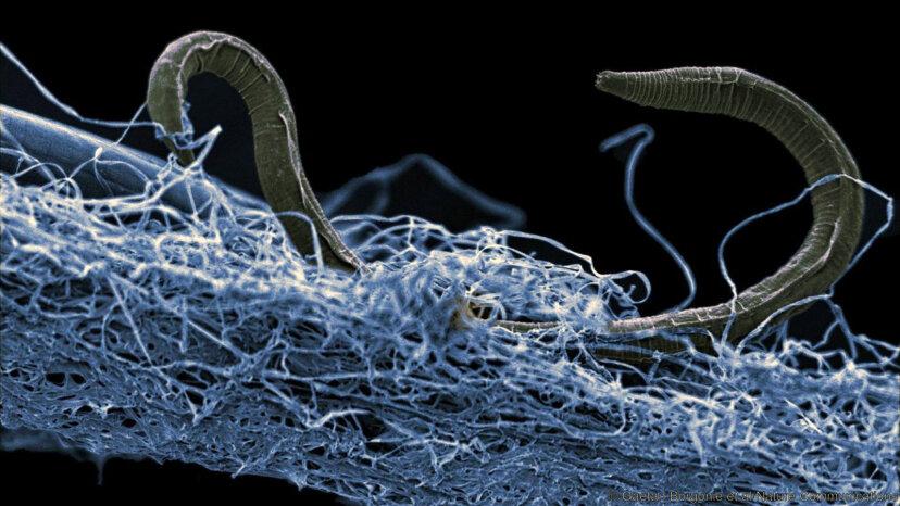 地球の表面の奥深くで発見された大量の生命