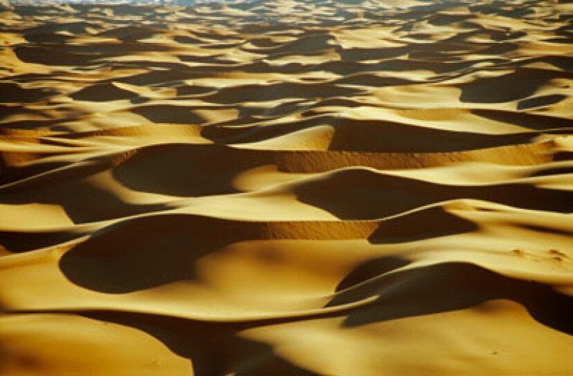 砂漠の生存はどのように機能するか