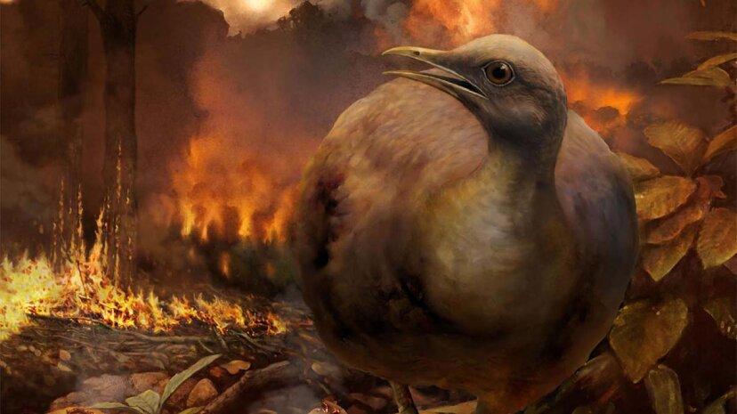 地上に生息する羽毛恐竜から進化した可能性が高い今日の鳥