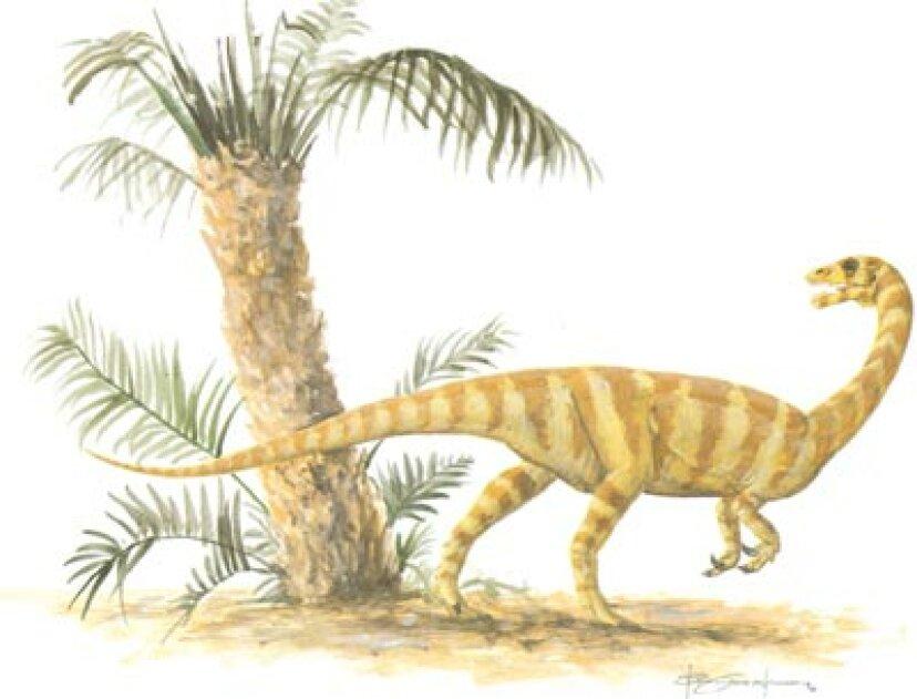 アンキサウルス