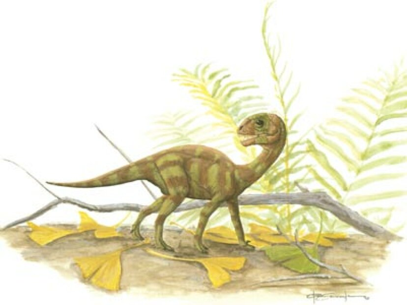 ムスサウルス