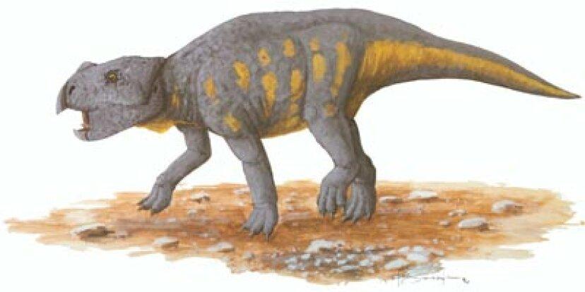 バガケラトプス