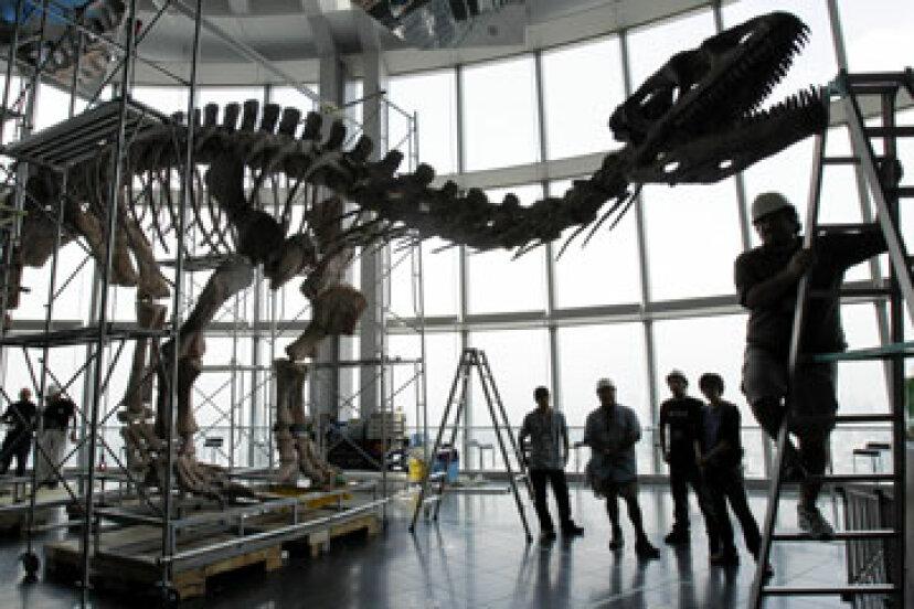 恐竜の化石に軟組織はどのように存在するのでしょうか?