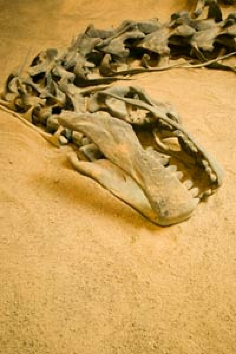 恐竜は地球上で最も成功した動物でしたか?