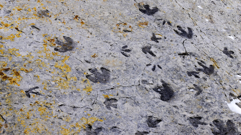dinosaur ridge footprints