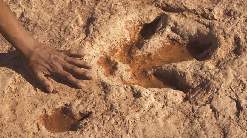 human hand next to dinosaur footprint