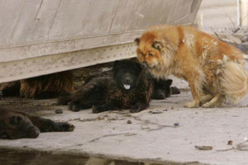 ペットのための10の災害サバイバルのヒント