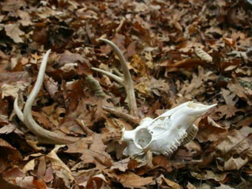 死んだ動物の処分の概要