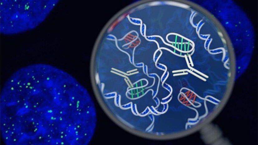 DNA, cells