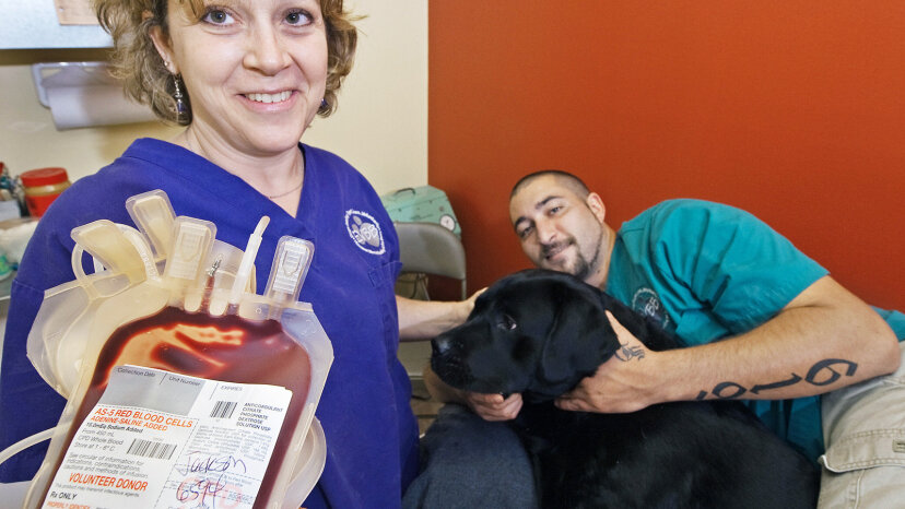 dogs donating blood