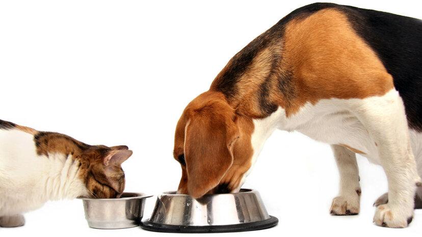 犬のキャットフードをピンチで与えることはできますか?