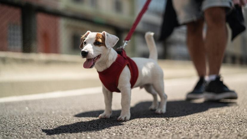あなたの犬をひもでつなぐための最良の方法は何ですか?