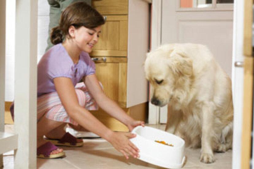 加齢とともに犬の栄養ニーズはどのように変化するのでしょうか?