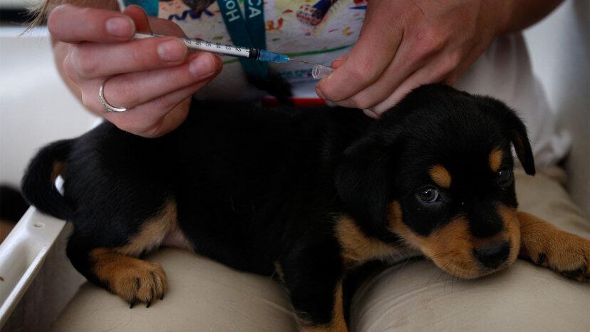 ショットが多すぎますか?犬の予防接種論争の内部
