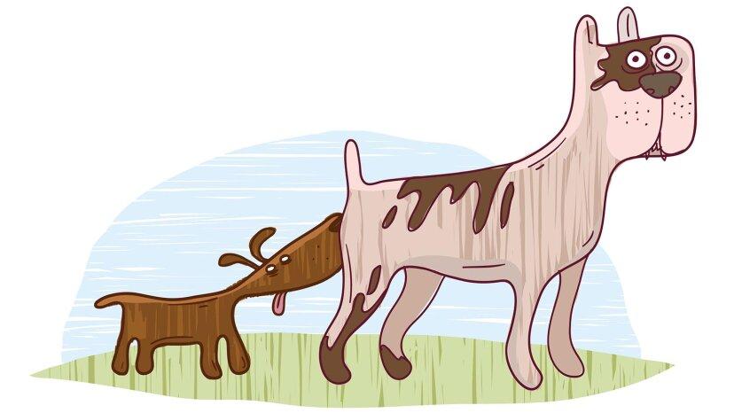 なぜ犬は肛門腺を持っているのですか?
