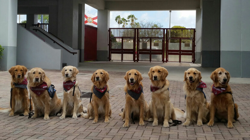 golden retrievers, comfort dogs, school shooting