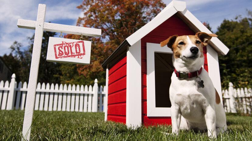越来越多的千禧一代在买房时考虑到他们的狗。点图片/盖蒂图片社