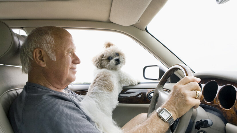 ¿Es ilegal conducir con un perro en el regazo?