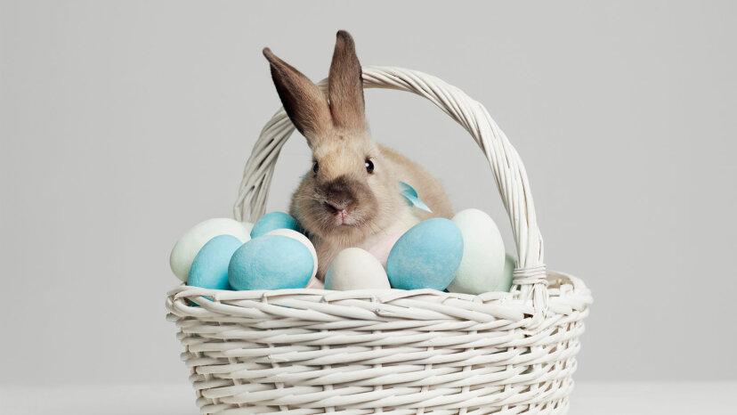 bunny in basket of eggs