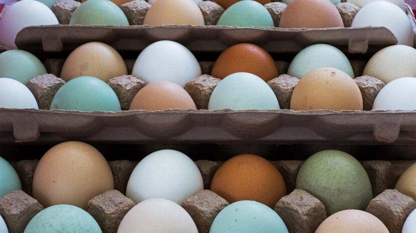 白、茶色、緑の鶏卵:違いは何ですか?