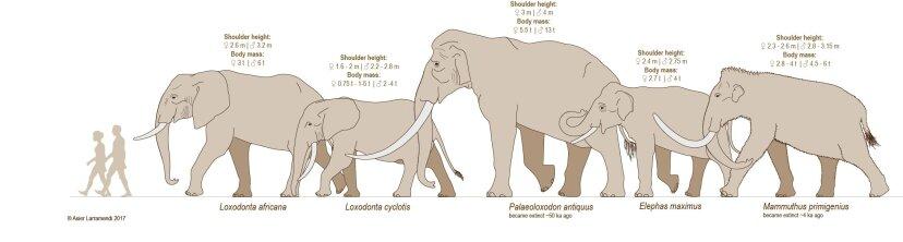 elephant species comparison