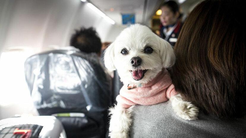 Nueva resolución toma medidas enérgicas contra los animales de apoyo emocional en los aviones