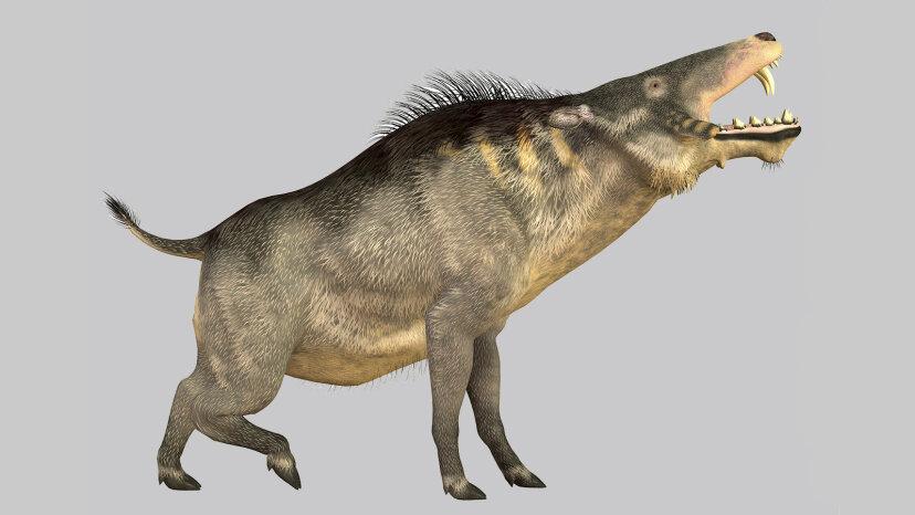 Beängstigende prähistorische 'Höllenschweine', die einst die Erde durchstreiften