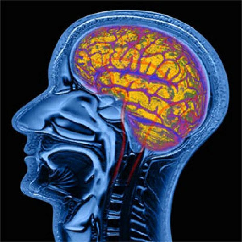 超感覚的脳とは何ですか?