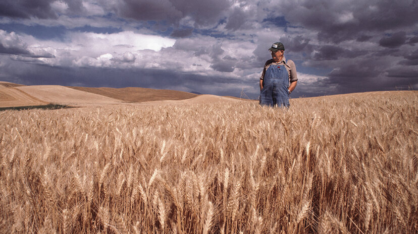 A new study shows that suicide afflicts farmers in the United States at a rate consistently higher than any other profession. Anthony Boccaccio/Getty Images