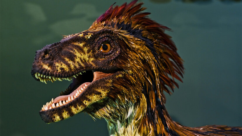 feathered dinosaur portrait