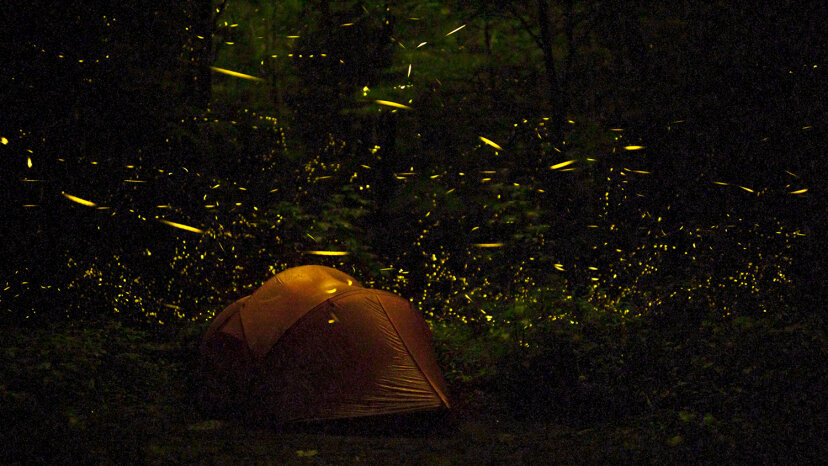 Fireflies surround the lucky residents of a tent pitched in the Great Smokies in June 2013.