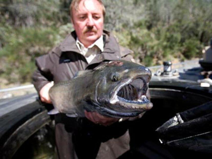 魚の管理者とは何ですか?