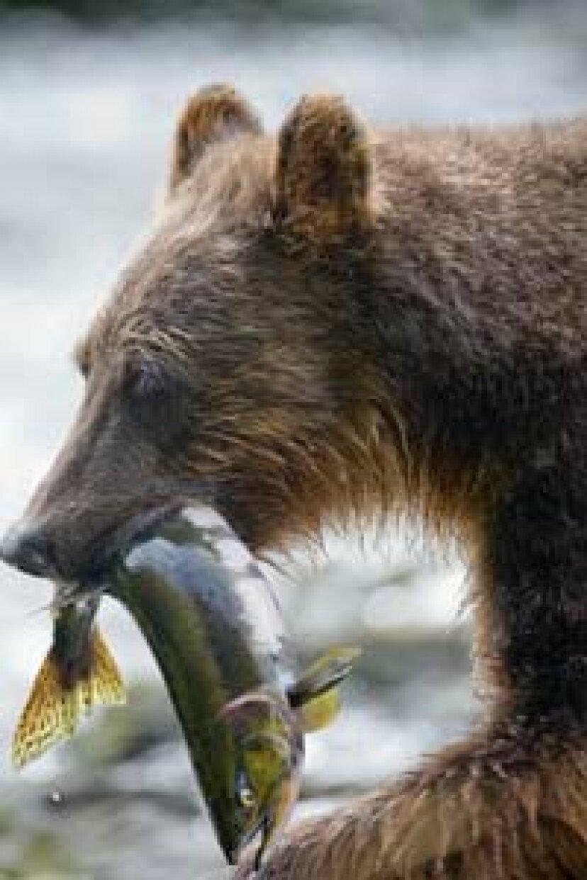 ロッドアンドリールなしでどうやって魚を捕まえることができますか?