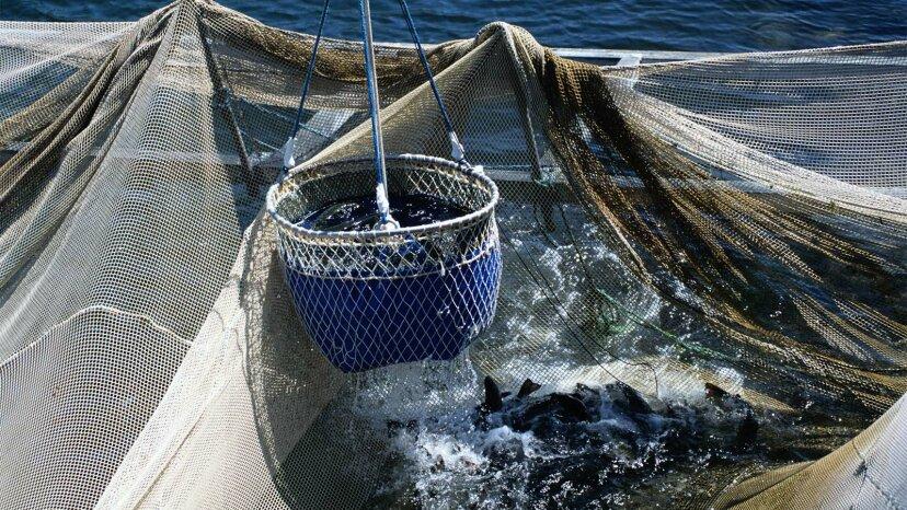 安い磁石はサメを漁網から遠ざけることができます