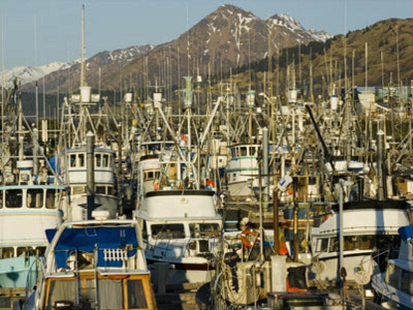 漁獲割当はどのように設定されていますか?
