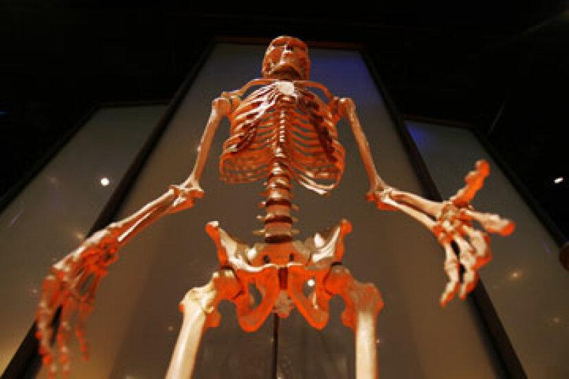 人類の進化の化石の証拠はありますか?