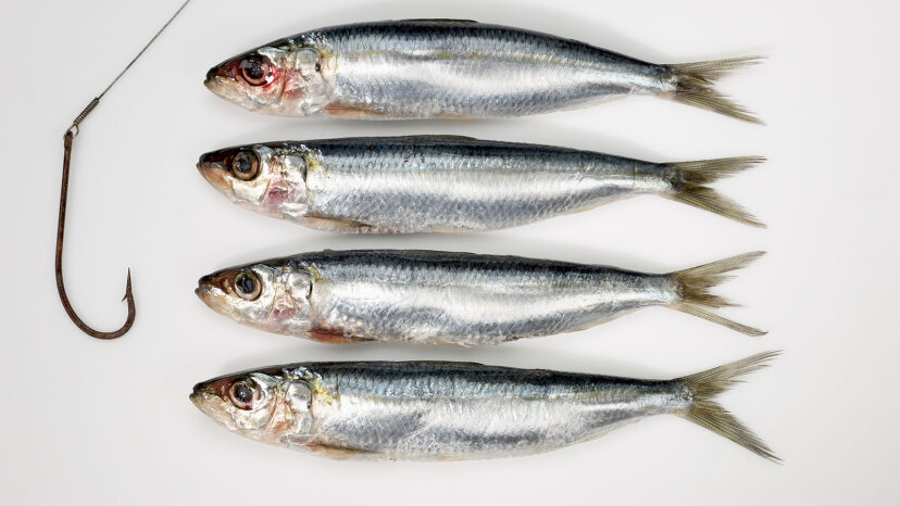 Four sardines and fish hook
