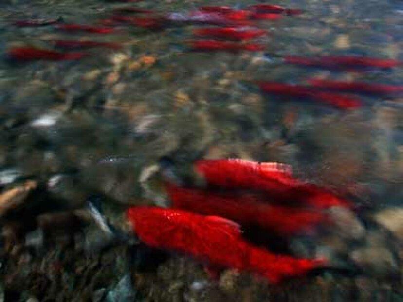 淡水の生息地に対する最大の脅威は何ですか?