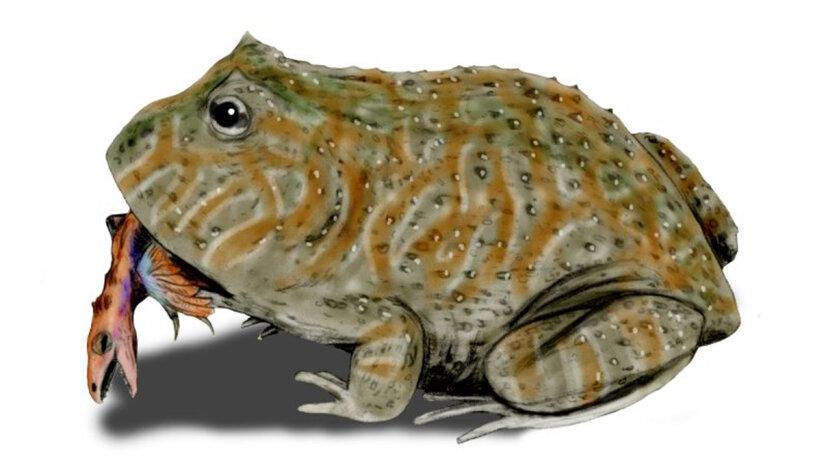Prähistorischer Frosch hatte einen monströsen Biss