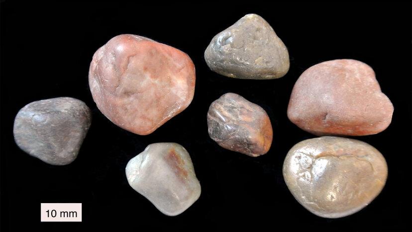 一部の動物が消化を助けるために岩を食べる理由
