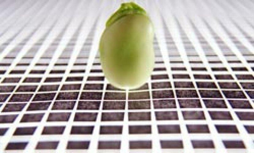 遺伝子組み換え食品の写真