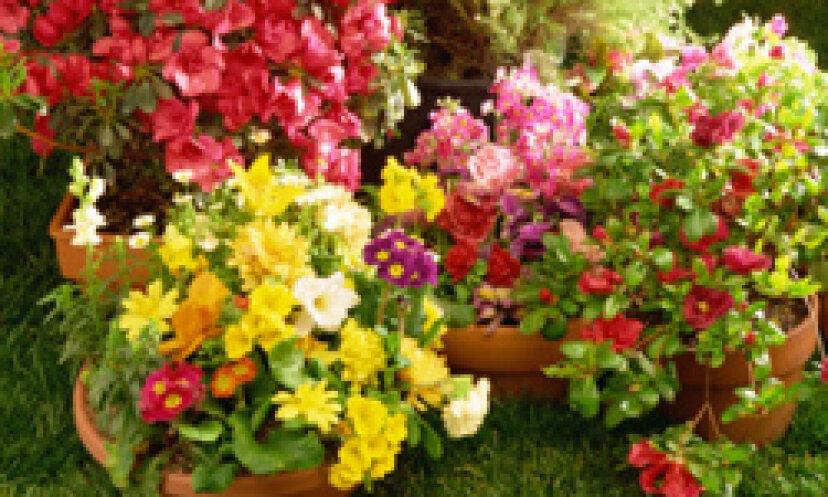 あなたの庭を春に向けて準備するためにあなたが今しなければならないこと