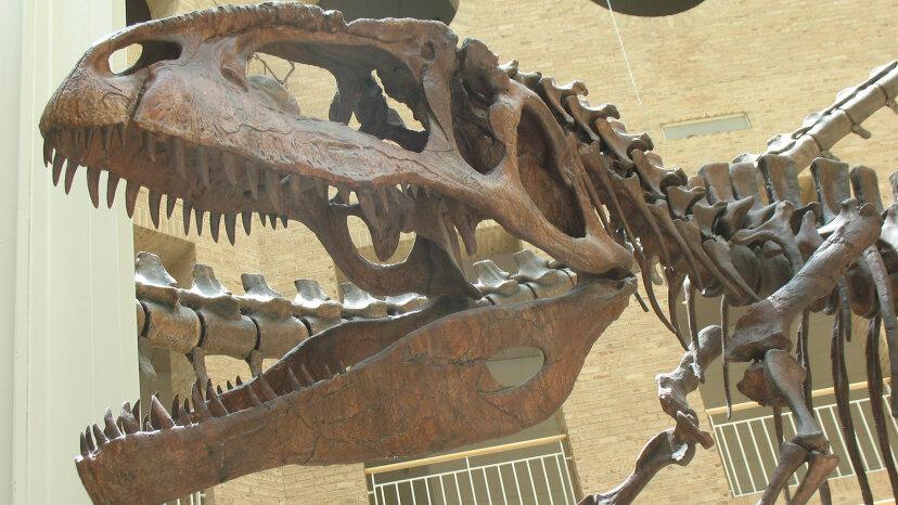 ギガノトサウルスは史上最大の肉食恐竜の 1 つでした
