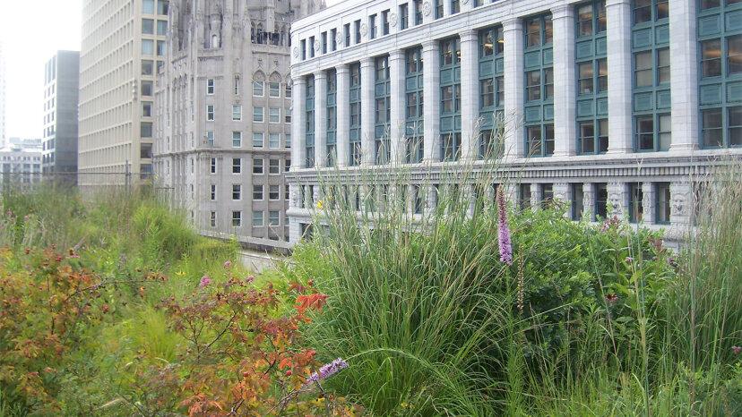 より多くの都市が屋上緑化を必要としないのはなぜですか?