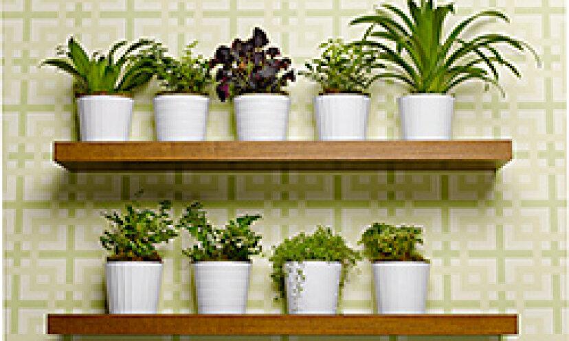 緑化と美化:3つの環境に優しい家の装飾のアイデア