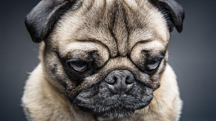 見知らぬ人は不機嫌そうな犬に新しいトリックを教えるのが得意だ、と研究は言います