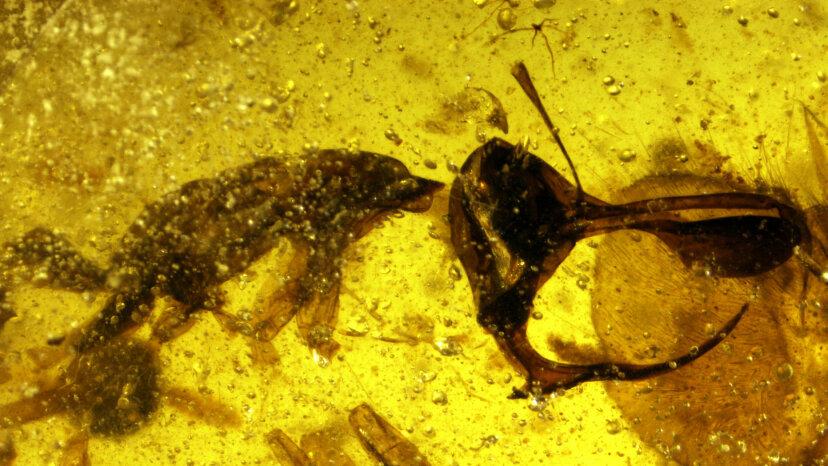 Prähistorischer 'Hell Ant' Sported Metal Spike zum Saugen von Blut